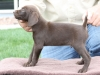 shadow-3-male-pup-left-side