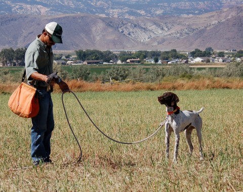 an introduction to the issue of hunting dogs Barking, biting, chewing and many other common dog behavior problems are often misunderstood or mishandled by dog owners perhaps you are new to dog ownership, considering getting a dog, or just wish to better manage your dogthoroughly understanding the most common dog behavior problems is the first step to solving and preventing them.