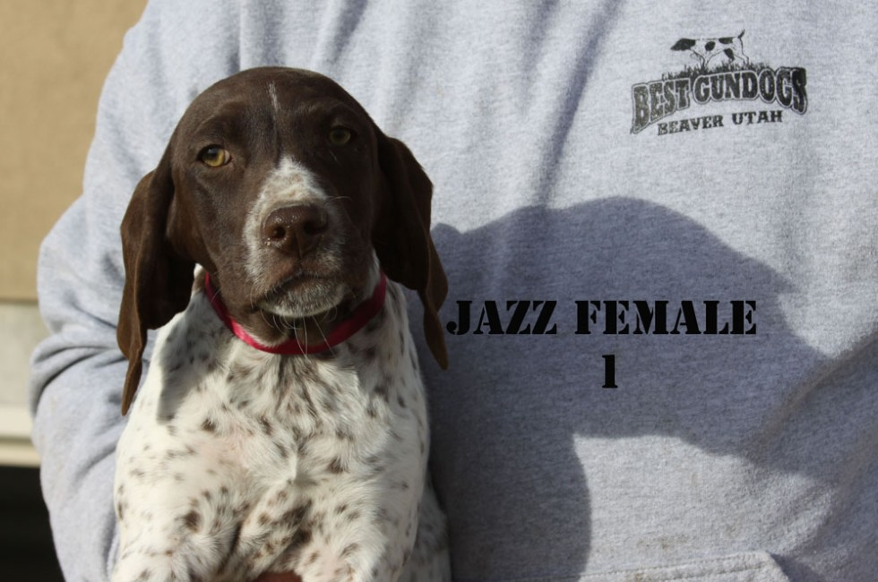 Jazz-Female-1-Face
