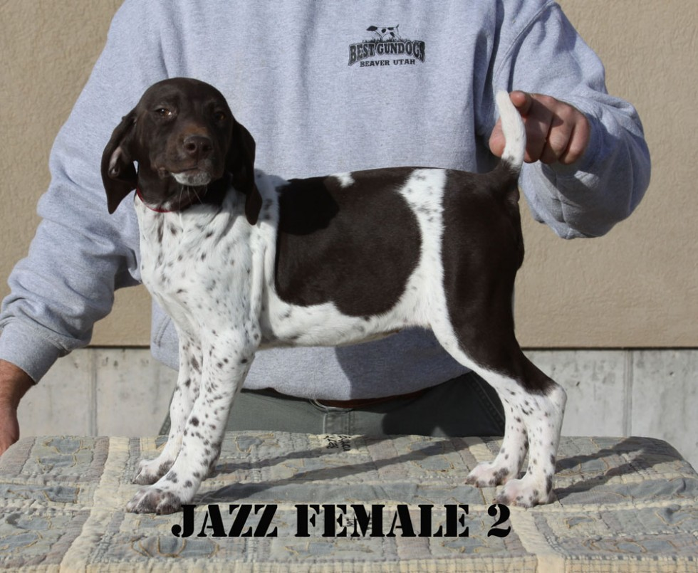 Jazz-Female-2-a