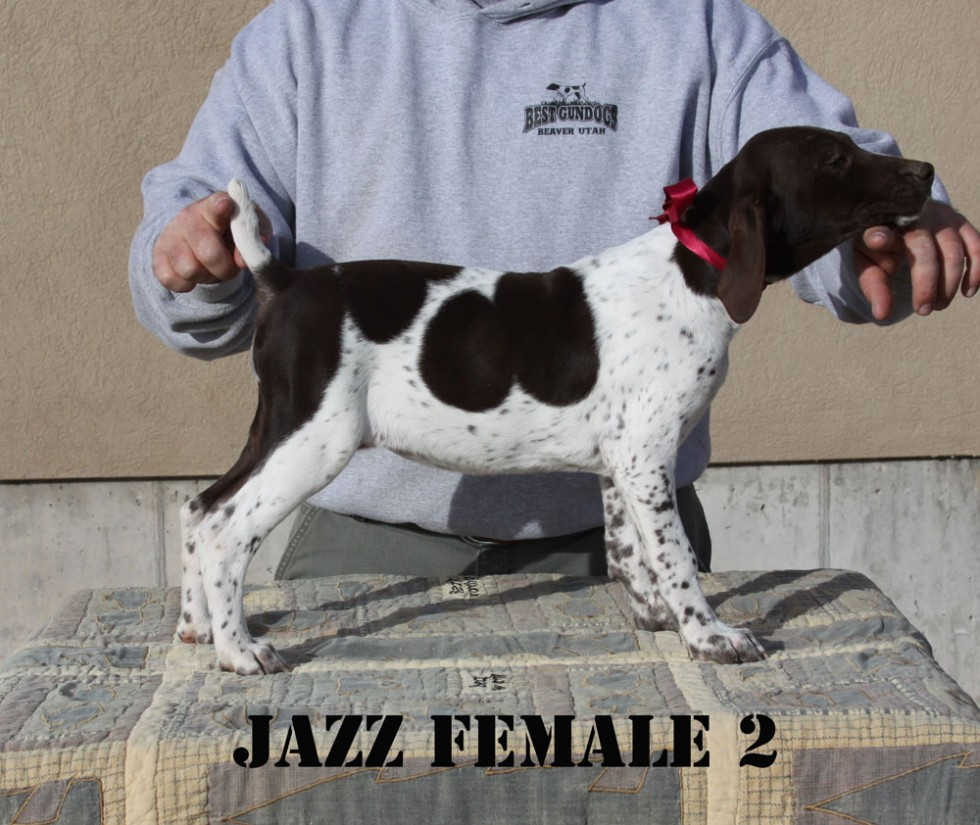 Jazz-Female-2