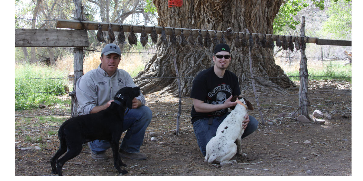 Quail Hunting with Bird Dogs