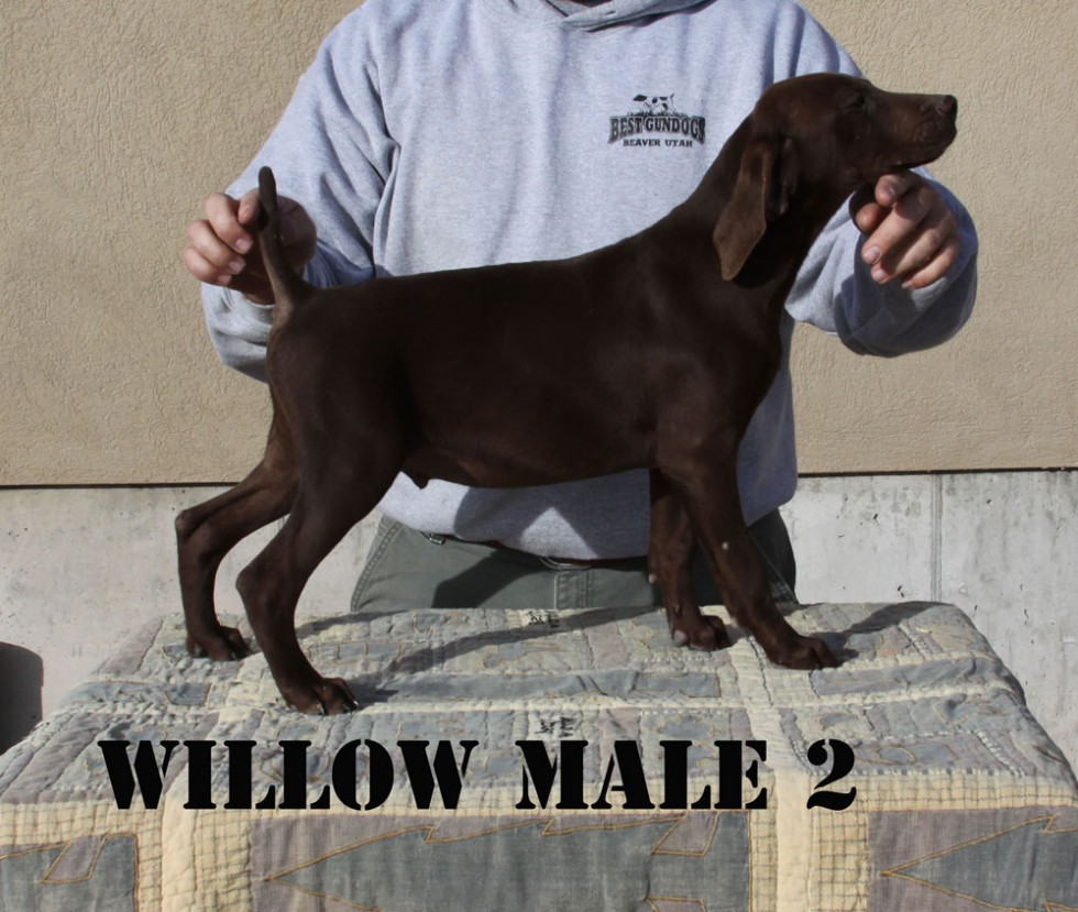 willwo-male-2